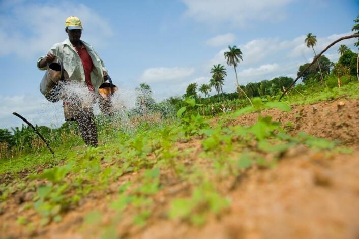 Store utfordringer for afrikanske grønnsakdyrkere. (Foto: Arnstein Staverløkk)