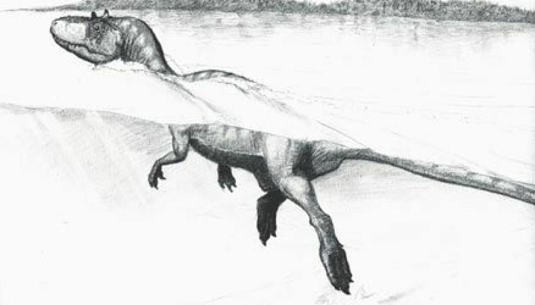 """""""Tegning av en svømmende theropode-dinosaur ved bredden av sjøen Cameros som lå i Spania i Kritt-tiden. Tegning: Guillaume Suan, Universitetet i Lyon."""""""