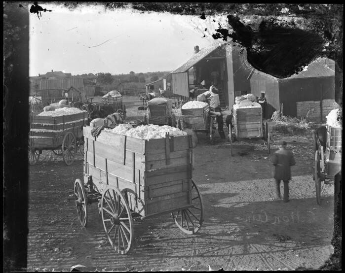 Wagons filled with cotton waiting in line to get their cotton ginned. The Norwegian-Texans in Bosque County grew wheat before and after the Civil War. After the war, they also began growing cotton. Around 1900 the Norwegian-Texans in Bosque County depended on their cotton harvest as much as their American neighbours. One bale of cotton was maybe enough to pay the grocery bill for a whole year.