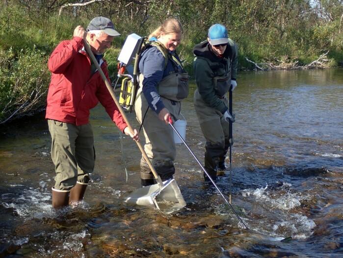 Feltarbeid i Vesterelva i Finnmark. Fra venstre Mark Wipfli, Kathy Dunlop, Jenny Jensen og Erik Schoen.