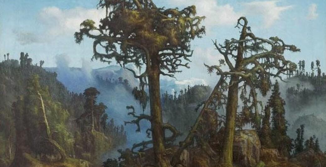 Er vi i ferd med å glemme hvordan skogen egentlig ser ut?