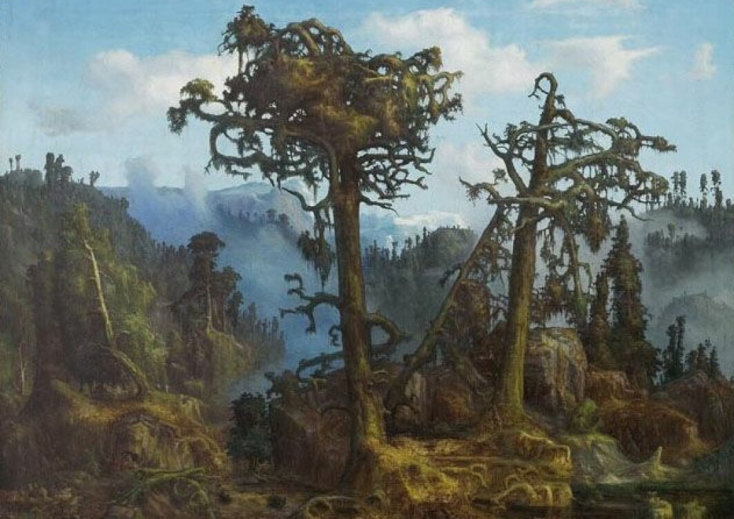 Bildetekst: Krokete gamle furuer i skumringen og skjeggete graner som knirker i vinden. Slik er urskogen tolket av kunstneren Lars Hertervig som malte «Gamle Furutrær» i 1865. Finnes slik skog fremdeles?