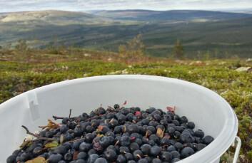 (Foto: Arnfinn Christensen, forskning.no.)