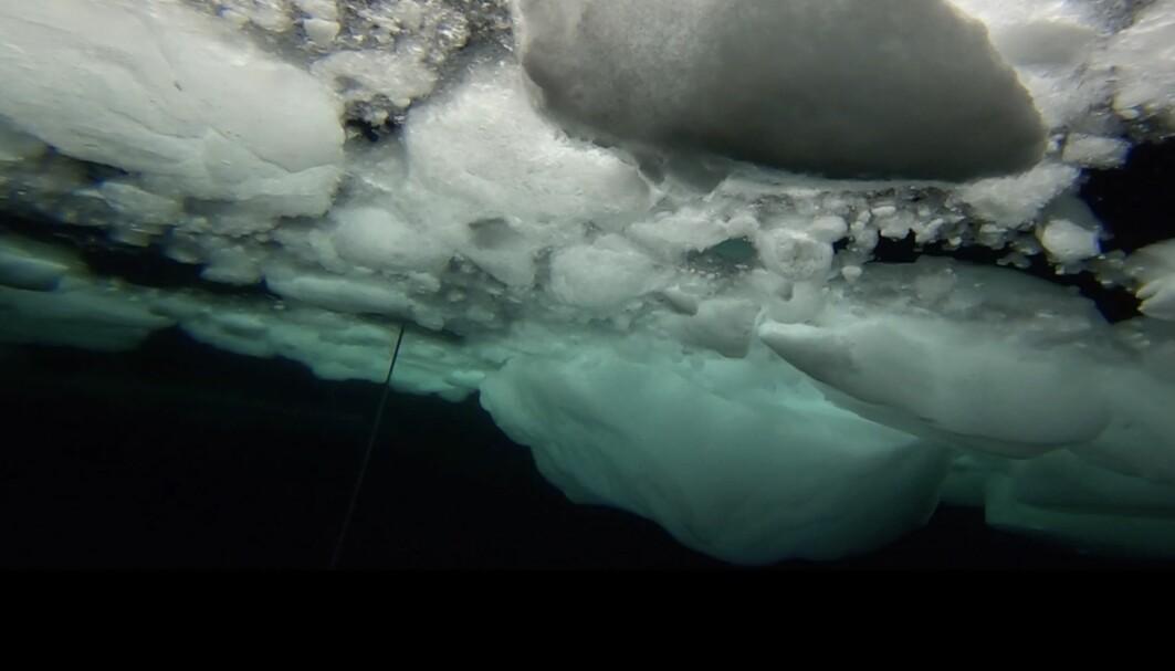 Slik ser isen ut fra undersiden. Bare lyset fra forskningsskipet lyser den opp.