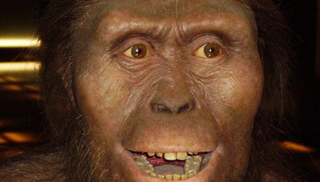 En veldig hyggelig rekonstruksjon av Australopithecus afarensis. Legg merke til de store kinnbeina. (Foto: Wikipedia Commons)