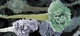 Soppinfeksjoner kan bli en global helsetrussel