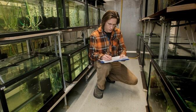 It looks like evolution is slower than global warming in this case, says associate professor Fredrik Jutfelt.