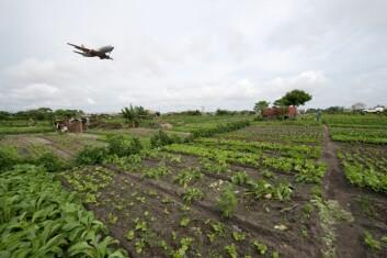 Flere tusen dyrker grønnsaker inne på flyplassområdet til Cotonou Cadjehoun Airport. (Foto: Arnstein Staverløkk)