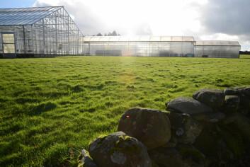 Veksthus på Bioforsk Vest Særheim. (Foto: Kjerstin Gjengedal)