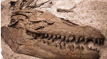 Forhistorisk øgle overrasker med fiskehale