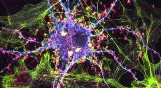 Ikke-hallusinerende psykedelisk stoff fikk rotter til å slutte med heroin