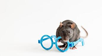 Blinde mus fikk synet tilbake