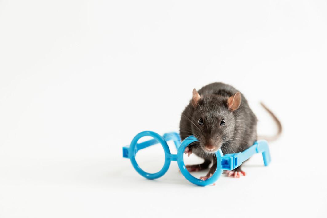Omprogrammering av nerveceller i øynene på mus kan gjenopprette synet hos de gamle musene, viser ny studie publisert i Nature.