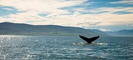 Nye lover må til for å bevare havene