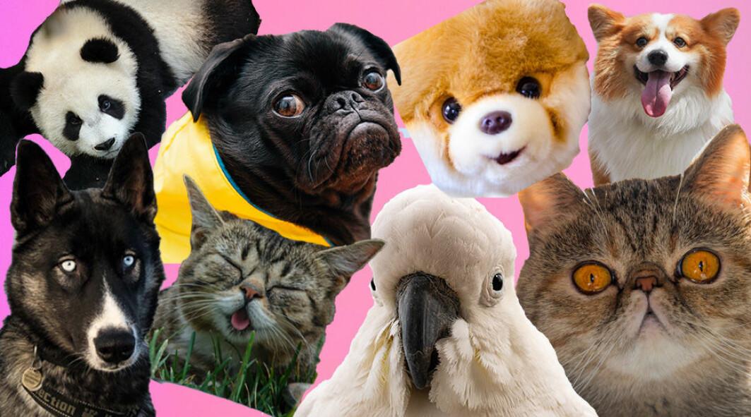 Å se videoer og bilder av søte dyr er samlet sett noe av det vi bruker mest tid på på internett.