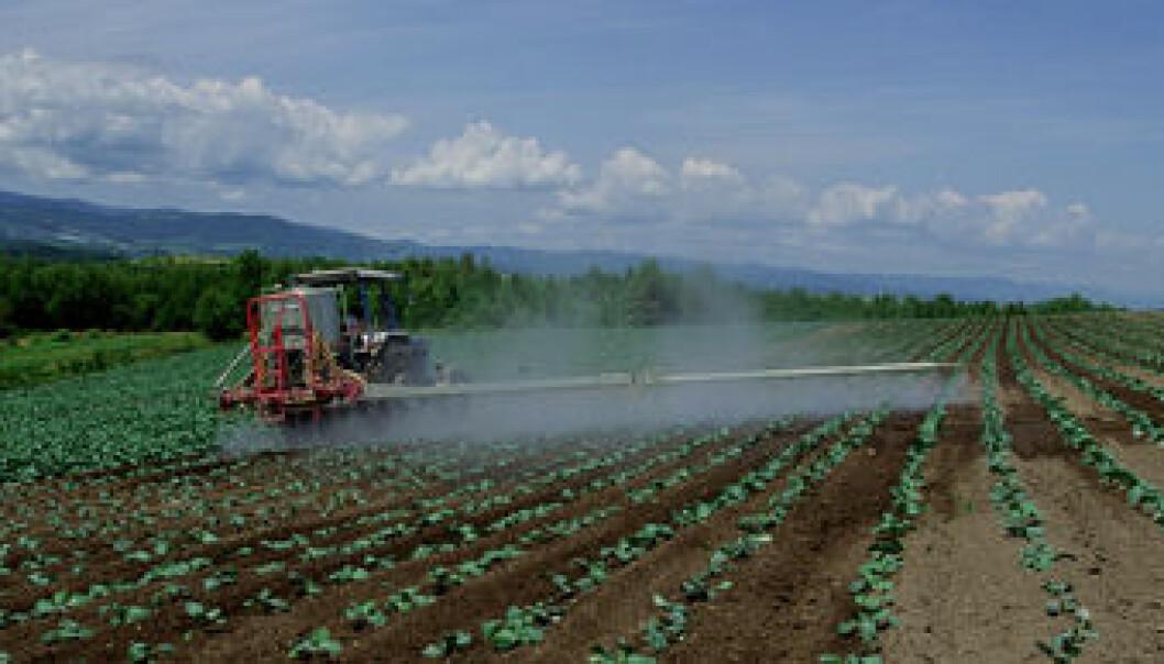 Mer antioksidanter i økologiske tomater