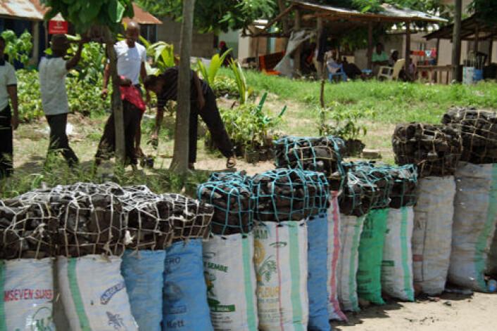 Trekull selges langs veiene i Tanzania. Produksjon av trekull er en viktig årsak til avskoging og er strengt regulert. Trekull som selges kan ofte være produsert ulovlig. (Foto: Asle Rønning)