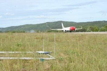 Sikkerhetsområdet rundt Kristiansand Lufthavn er unikt og kartlagt som en av landets største artsrike tørrenger. (Foto: Ellen Svalheim)