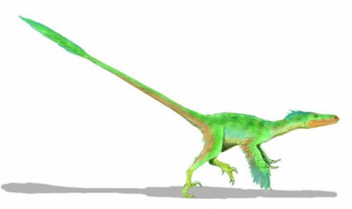 """""""Velociraptor - her med fjær. """""""