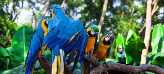 Avskoging og ulovlig handel truer flere papegøyearter