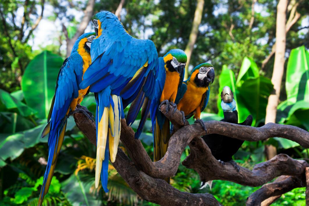 I 2020 er det 55 papegøyearter på ei liste over ville dyr og planter som trenger ekstra sterk beskyttelse mot handel.