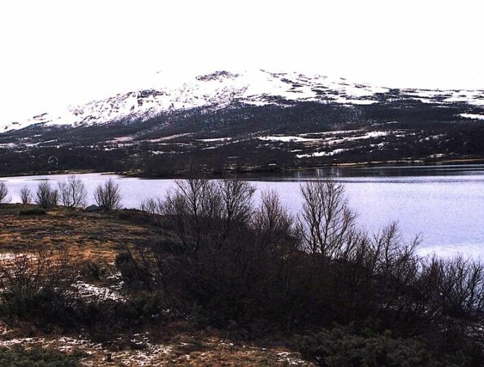 """""""Dovrefjell er en del av den paleiske overflaten, eller fornvidda som den kalles avforfatterne av Norsk geologisk leksikon."""" (Foto: Leif Knutsen)"""