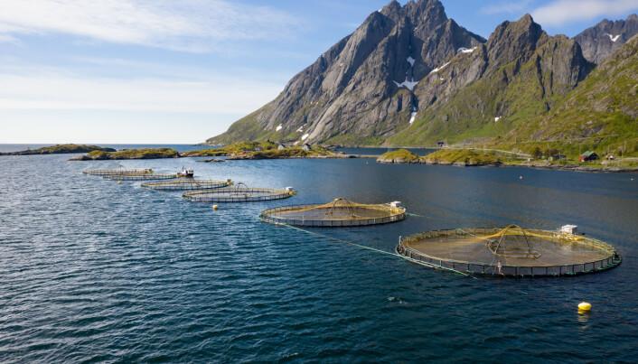 Kan norsk sjømat redde verden?