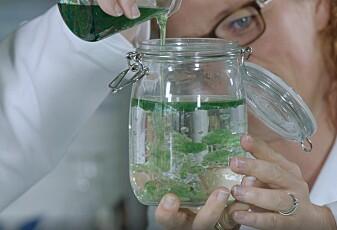 Julekalender luke 20: Minifyrverkeri i et Norgesglass