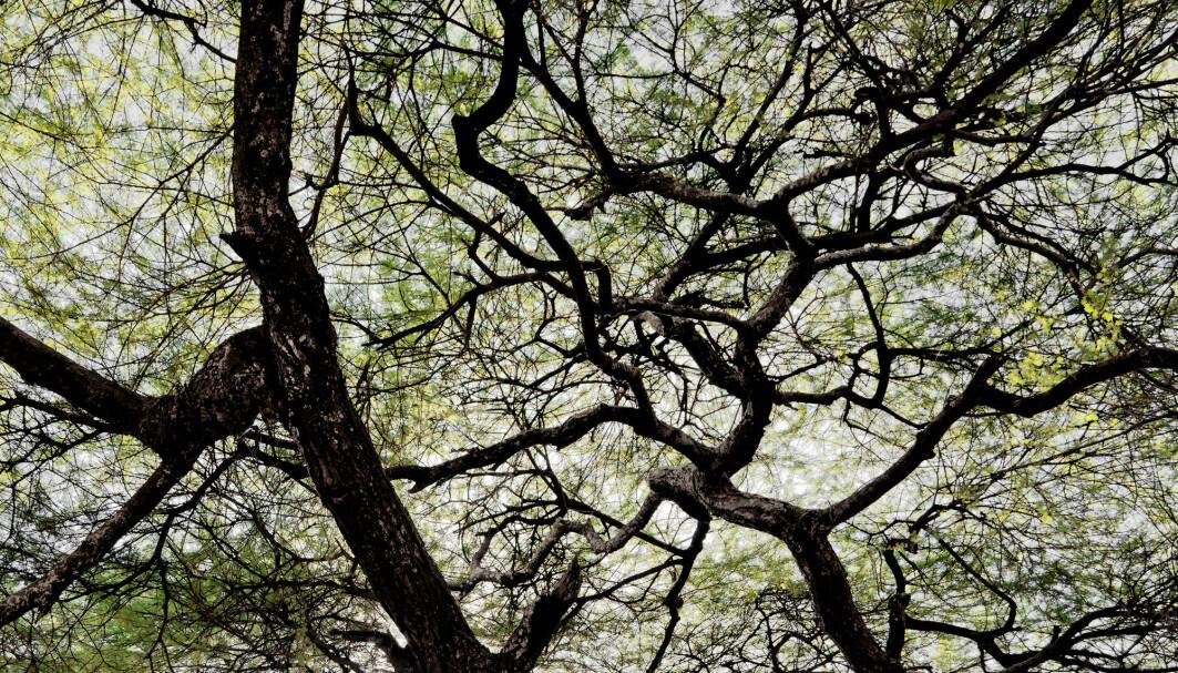 Et løvtres struktur kan betegnes som en naturlig fraktal.