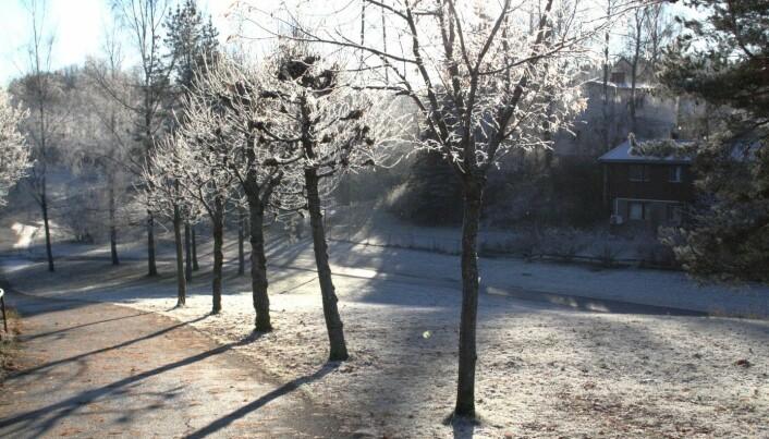 Høstens første frostdager vil opptre senere på høsten enn vi er vant til, og gi en kortere frostperiode.