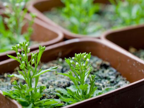Planter kan også være morgenfugler og nattugler