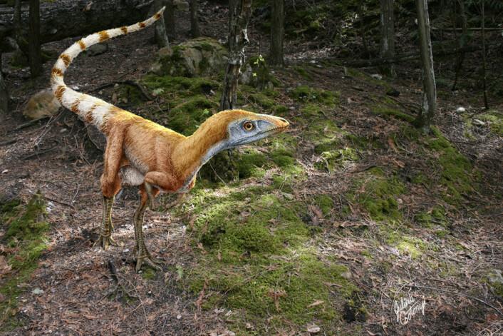 Dinosauren Sinosauropteryx prima var omtrent en meter lang og levde i Kina i krittida. Fossilene etter dyret viser fjærlignende strukturer og nyere studier har antydet at fjærene hadde ulike nyanser av hvitt og rødbrunt. (Foto: Science Photo Library)