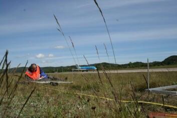 I 2008 fikk Bioforsk i oppdrag av Avinor om å gjøre registrering av biologisk mangfold langs søndre rullebaneende. (Foto: Ellen Svalheim)