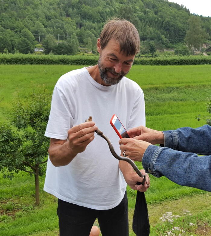 Den norske slettsnokforskeren, Pål Sørensen, viser fram en voksen slettsnok.