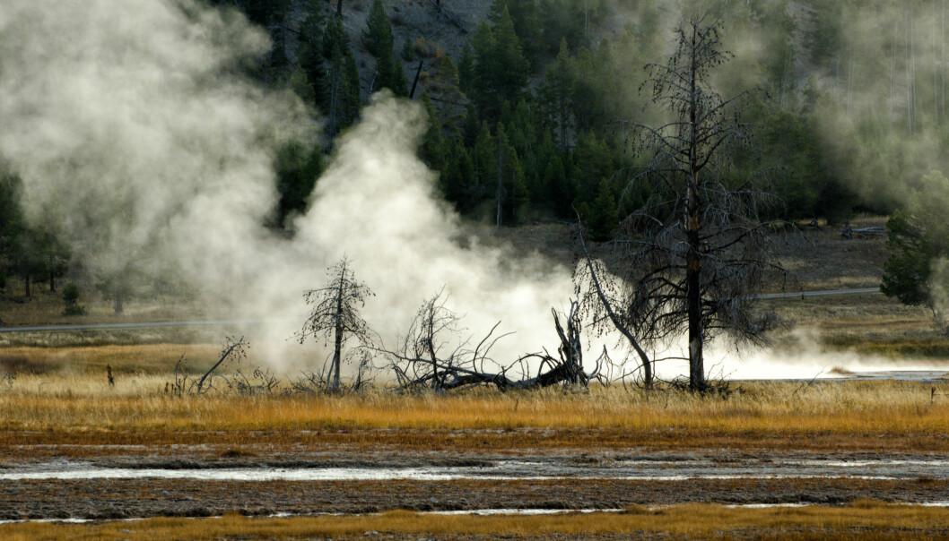 Dersom supervulkanen under Yellowstone nasjonalpark får et stort utbrudd kan det få konsekvenser rundt hele jorda. Klimaet kan bli endret i flere år eller flere tiår. Men amerikanske forskere mener det kan gå mange tusen år før et slikt stort utbrudd kommer. Og Yellowstone vil da danne en mer tradisjonell vulkan. Selv om Yellowstone er en supervulkan, vil den trolig ikke lage en stor vulkanprovins lik dem som kan ha stått bak de store masseutryddelsene.