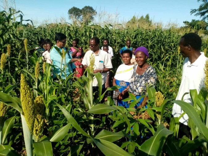 Ms. Getrude Sibanda (the lady with the purple hat) shows the vigorous growth of sorghum-pigeon pea in an intercropped field during a farmer's field day that was conducted in February 2020.