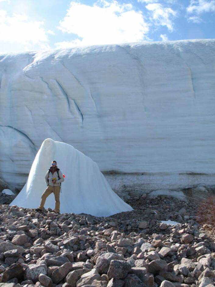 En av forskerne foran østgrensa av Teardrop-breen på Ellesmereøya. Der isen trekker seg tilbake dukker det fram gamle planterester. (Foto: Catherine La Farge)