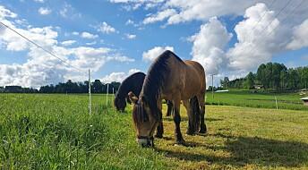 Hesten kan bli syk av å skifte beite