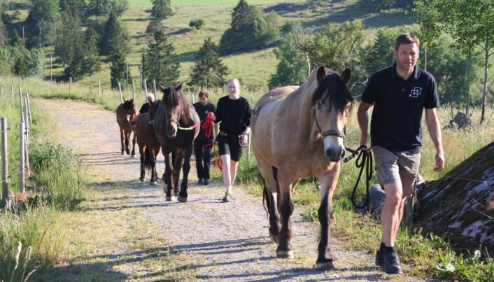 Hver dag ble hestene leid ut på beite og hentet inn igjen etter nøye oppsatt tidsskjema. I begynnelsen en halv time om dagen og senere på sommeren var tiden to ganger tre timer på beite morgen og kveld.