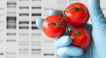 Har GM-planter skapt problemer for miljøet?