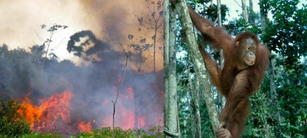 Store skogbranner truer med å utrydde 4400 arter