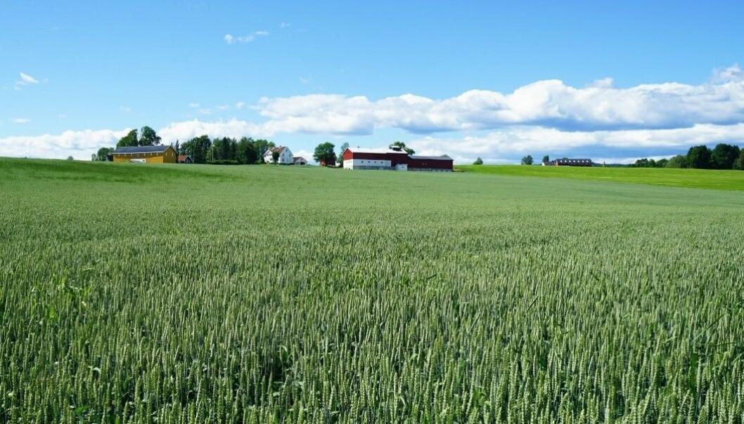 Når renseanleggene gjenvinner mer fosfor fra avløpsvannet, kan norske kornbønder få billigere gjødsel.