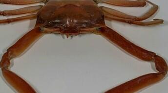 Søring krabber seg nordover