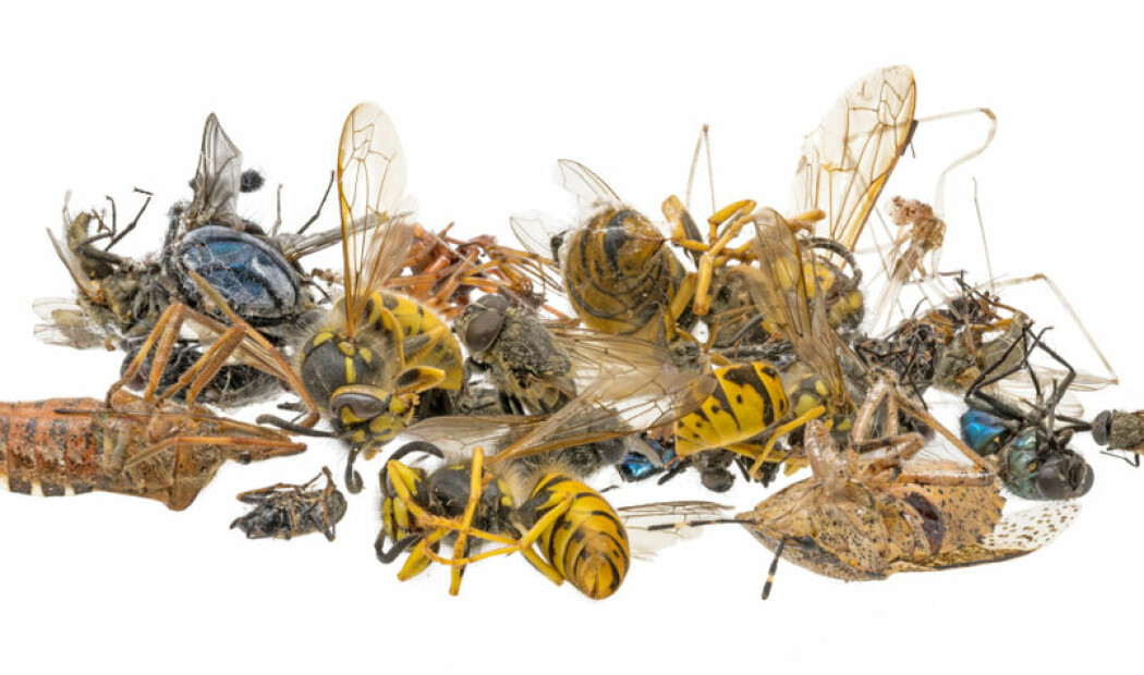 Insektapokalypse!! Eller?