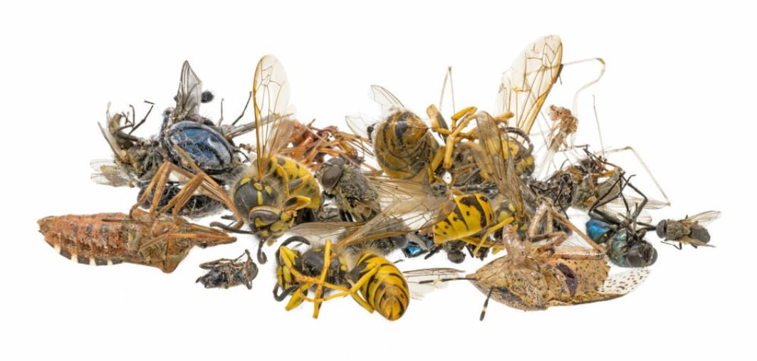 – Vi må gi plass til insektene og andre ville arter. Vi må slutte å beslaglegge stadig mer areal, helst må vi gi noe tilbake. Og vi må bli bedre til å sameksistere, ved at områdene vi påvirker blir brukt litt mindre intensivt, skriver Rannveig M. Jacobsen