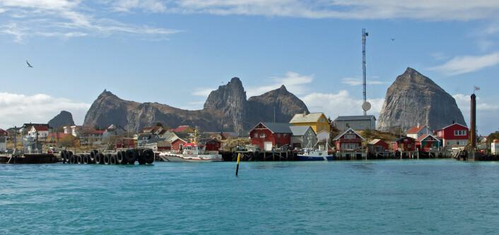 De bebodde øyene på Træna er blant dem som er med i gråspurvprosjektet. (Foto: Georg Mathisen)