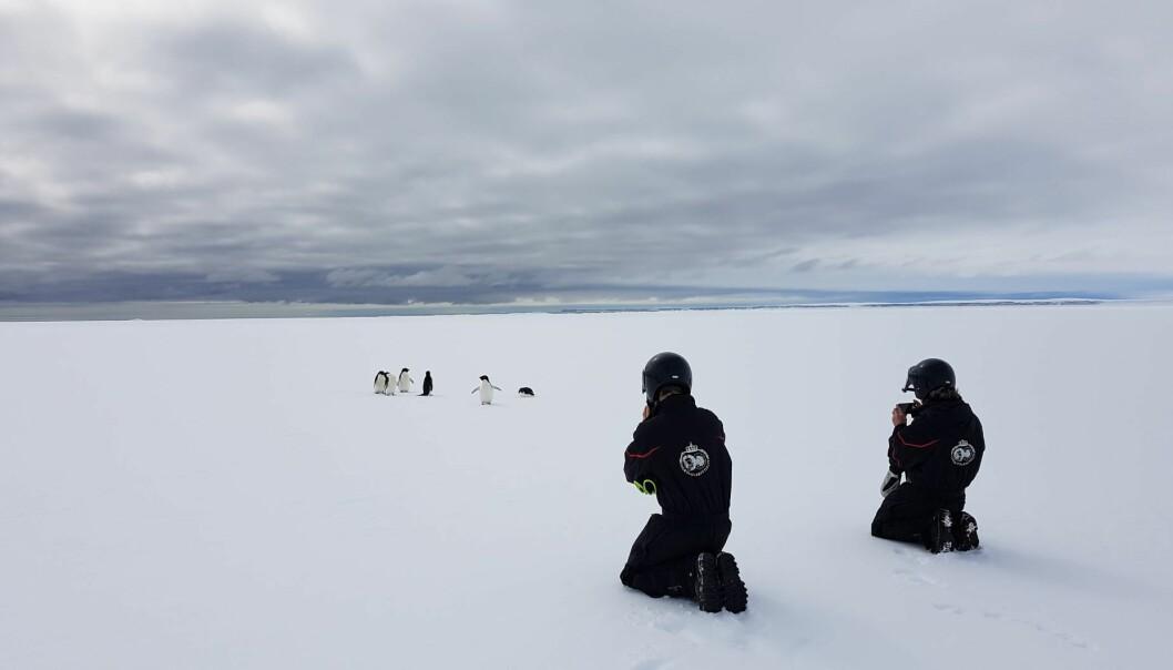 Utsikt mot drivende isfjell og adeliepingviner