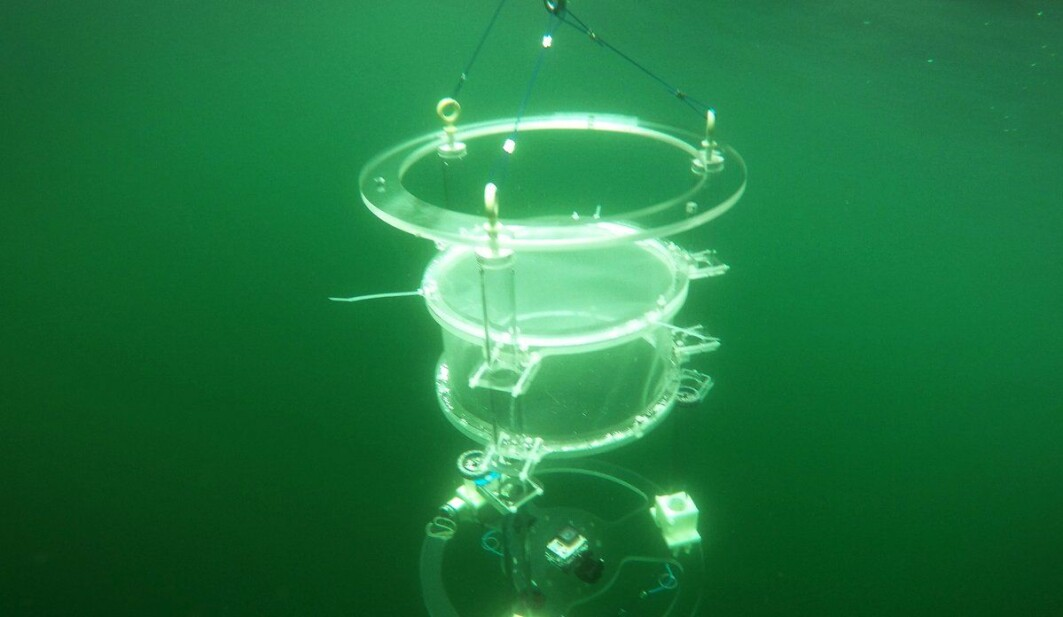 Underwater photo of a drifting chamber in the fjord.