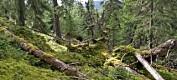 Det blir mer gammel skog i Norge