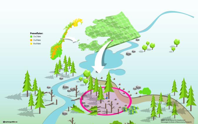 Landsskogtakseringen utarbeider oversikter og statistikk over arealer og skogressurser i hele Norge. Registreringene utføres på 22 800 faste prøveflater som er systematisk fordelt over hele landet.